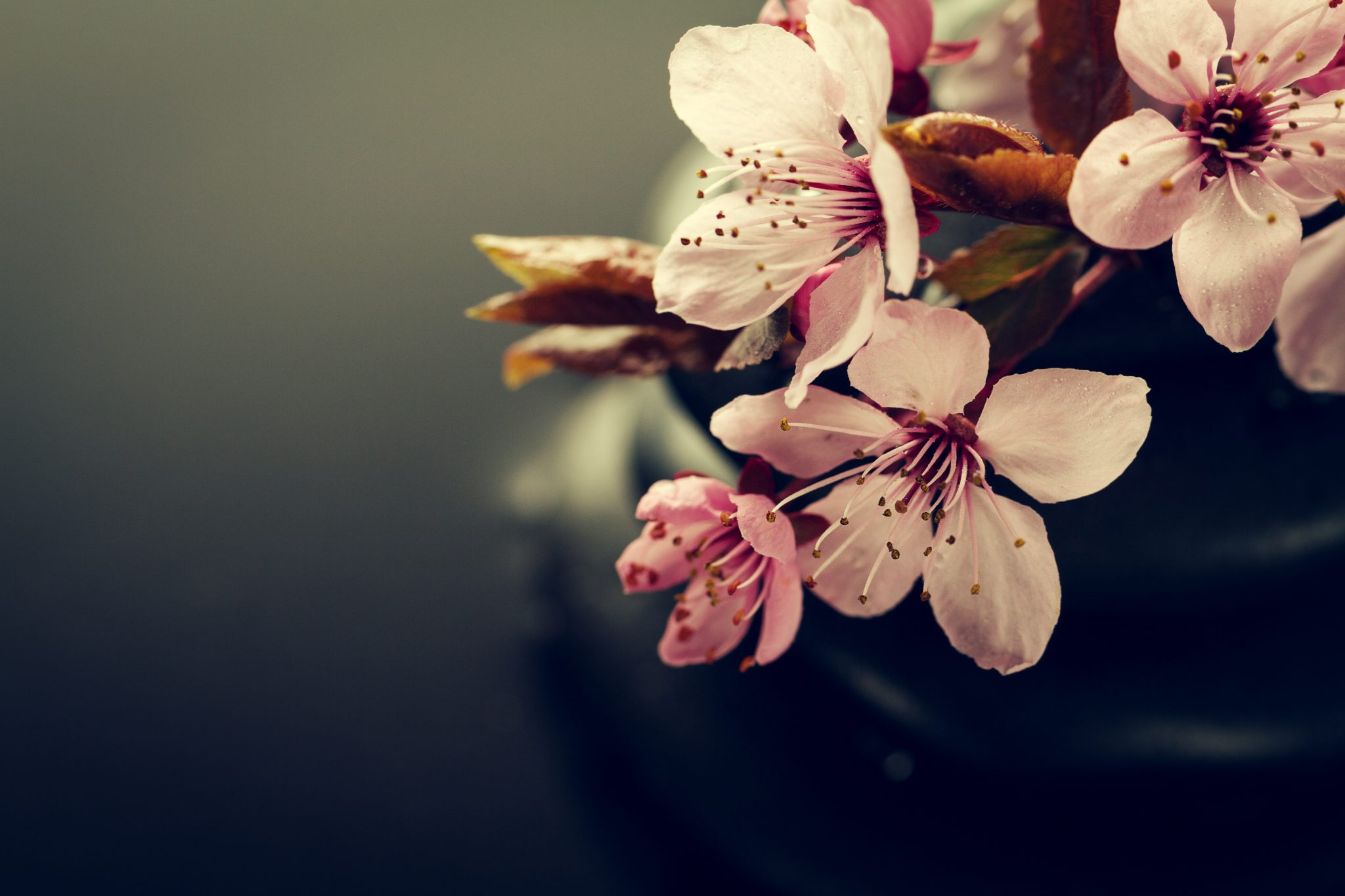 Beautiful pink Spa Flowers on Spa Hot Stones on Water Wet Backgr ...